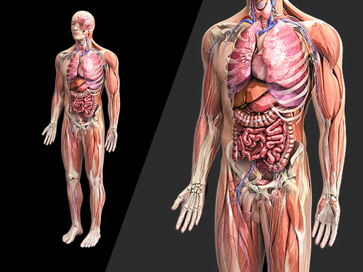 beautiful human body - HD1024×768